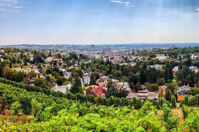 Sonnenverwöhnter Rheingau